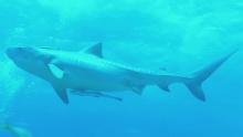 Акулы: Властелины подводного мира смотреть на Tvigle.ru
