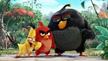 Angry Birds в кино. Трейлер смотреть на Tvigle.ru