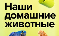 Наши домашние животные смотреть на Tvigle.ru