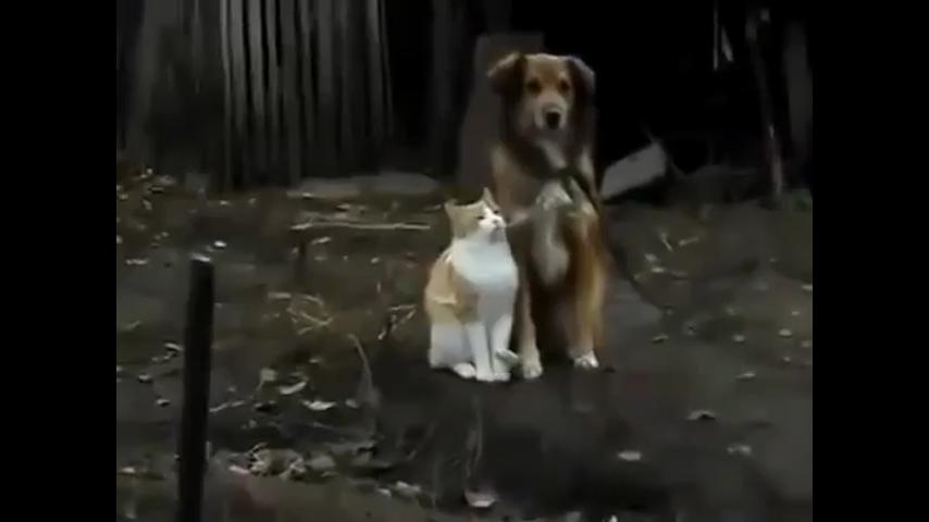 Смотреть видео в полной версии