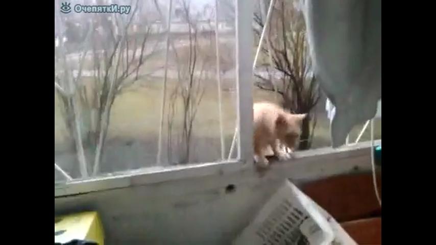 Кот паук смотреть