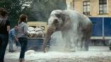 Слон смотреть на Tvigle.ru