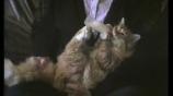Шаловливые коты смотреть на Tvigle.ru