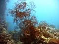 Лагуна Трук. Палуба затонувшего корабля