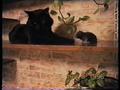 Веселые коты