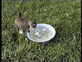 Неусидчивые кошки
