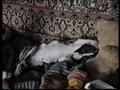 Уставший пес