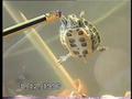 Черепаха, которая поет