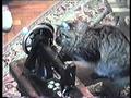 Заводные кошки
