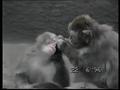 Заботливые обезьянки